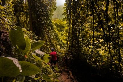 jungle2 (1 von 1)