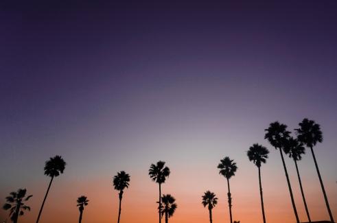 palmen (1 von 1)